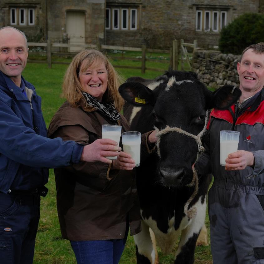Dales Dairies